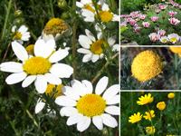 Багаторічні рослини список