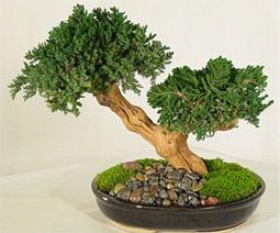 комнатные растения деревья названия и фото