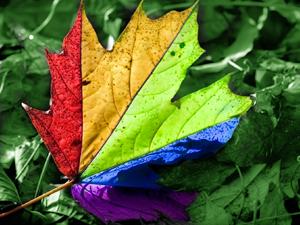 декоративно-лиственных растений фото виды