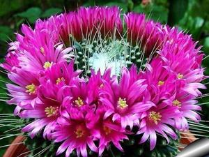 многолетние кустарники садовые фото и названия