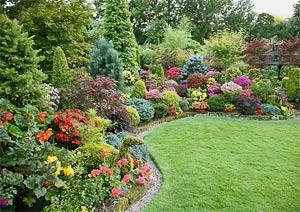 Кустарники фото, кустарники названия, кустарники названия и фото, садовые кустарники, кустарники для сада