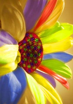 кустовые низкорослые цветы фото и названия