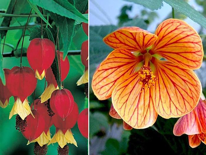 Названия тропических домашних цветов