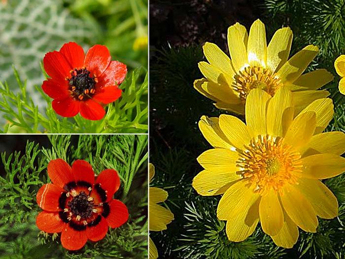 красивый букет цветов фото с надписями