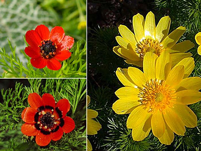 Название цветов в алфавитном порядке
